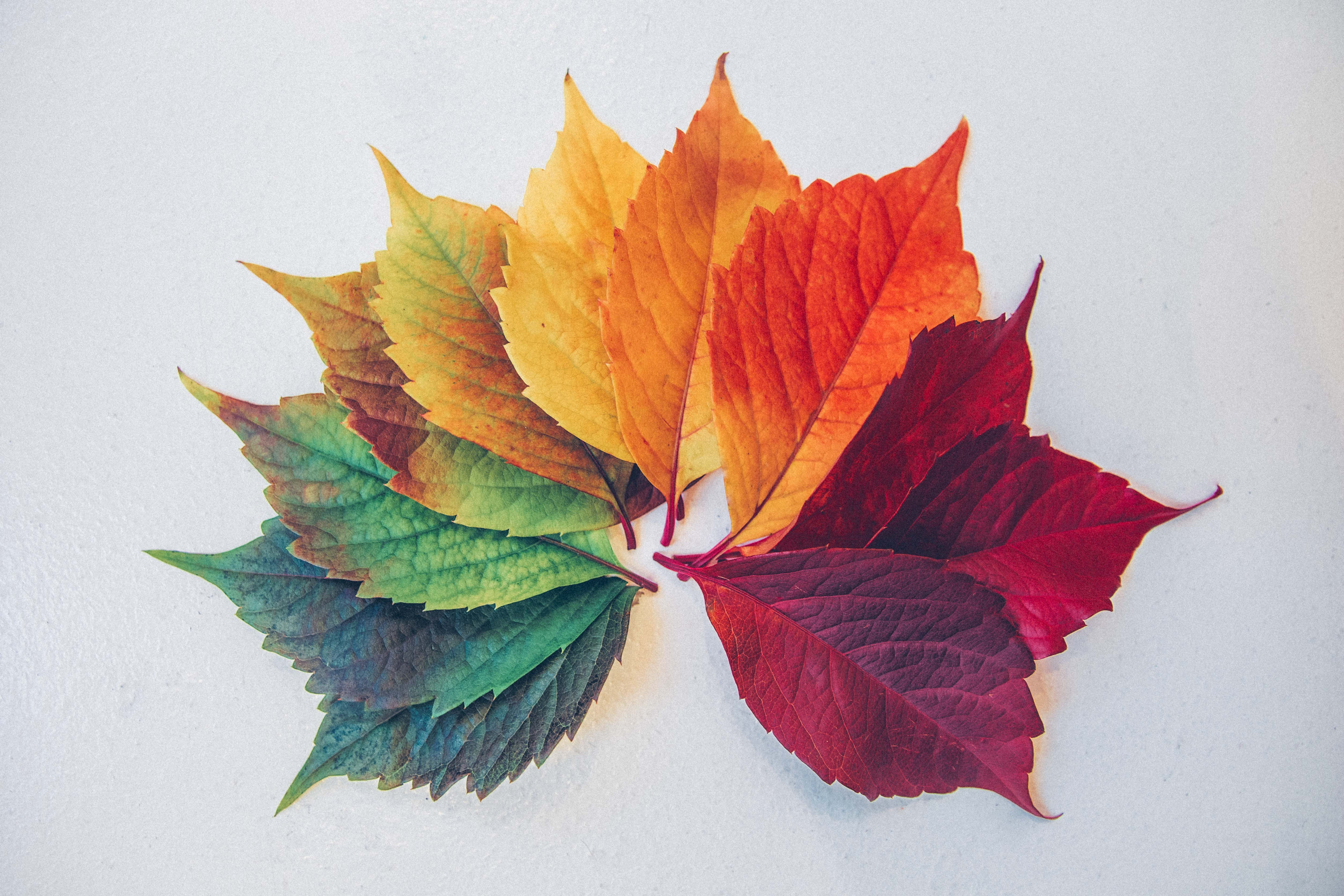 An array of colorful leaves, representing marketing seasonality.